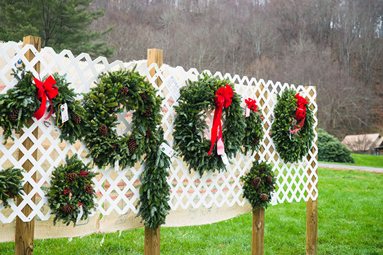 Boyd Mountain Christmas Tree Farm - Maggie Valley ...