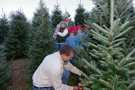 02 - Boyd Mountain Christmas Tree Farm - Maggie Valley, Waynesville